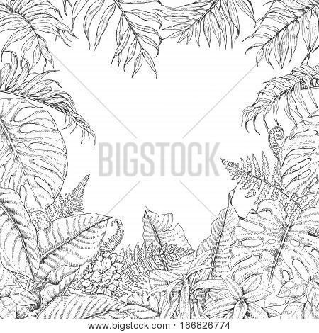 Hand drawn branches and leaves of tropical plants. Monochrome square floral frame. Monstera dieffenbachia fern palm fronds sketch. Black and white illustration coloring page for adult.