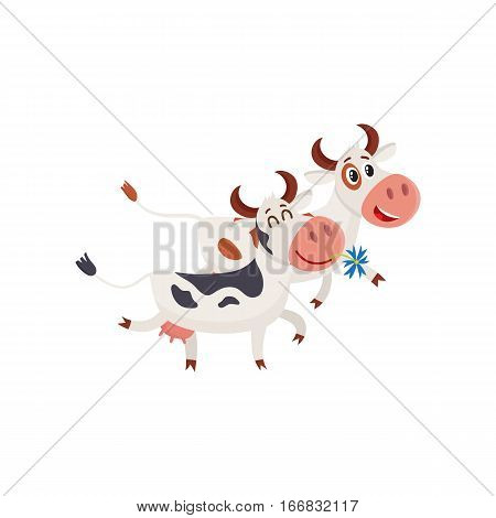 Two spotted cows walking together romantically, cartoon vector illustration isolated on white background. Funny cow holding daisy in mouth and walking together with a bull, dairy farm concept