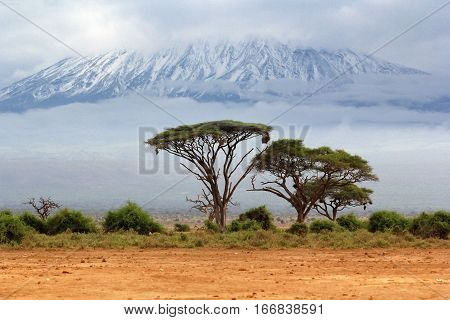 Mount Kilimanjaro Kenia the highest mountain in Africa.