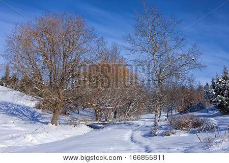 Barren trees in snowy park in Moscow Idaho.