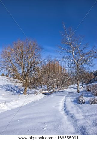 Snow covered park and blue sky in Moscow Idaho.