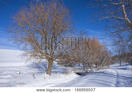 Trees and snowy park in Moscow Idaho.