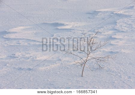 A small barren plant stands alone in a snow covered field.