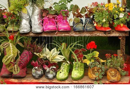 Plants in funny pots resembling a shoe pairs.