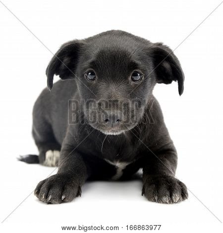 Studio Shot Of A Cute Mixed Breed Dog Puppy