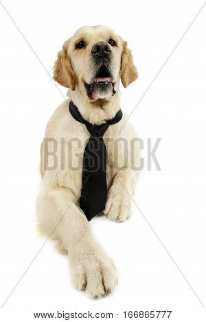 An Adorable Mixed Breed Dog Wearing A Tie