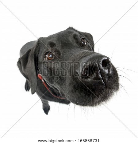 Wide Angle Shot Of An Adorable Mixed Breed Dog