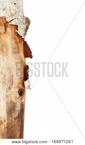 Part of tree stick isolated on white background