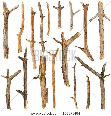 Set of tree branches isolated on white background