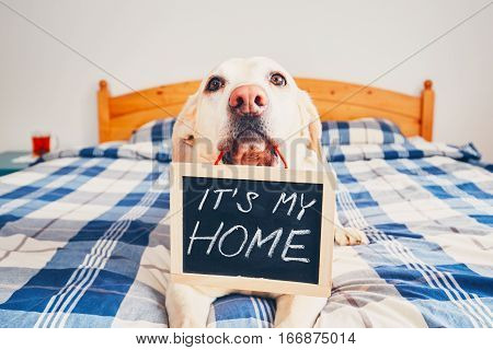 It Is My Home