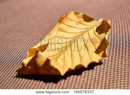 Yellow Leaf Close up, Texture and Background