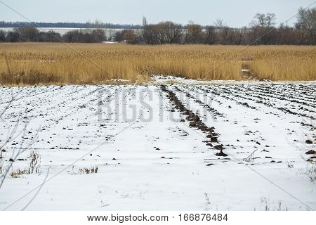 Agricultural field under the snow in winter. winter season