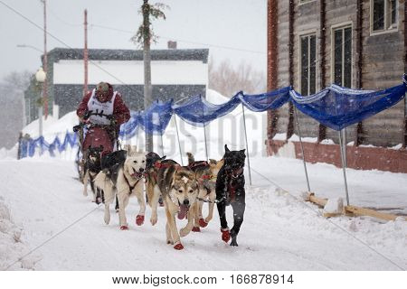 Calumet, MI - March 1, 2015:  CopperDog 150 sled dog race.  Teams traverse 150 miles over 3 days during the annual event, which starts and ends in historic Calumet, Michigan.  Musher shown is Frank Holmberg.