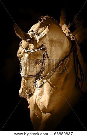 Sport dressage horse in manege over a dark background monochrome sepia colored art