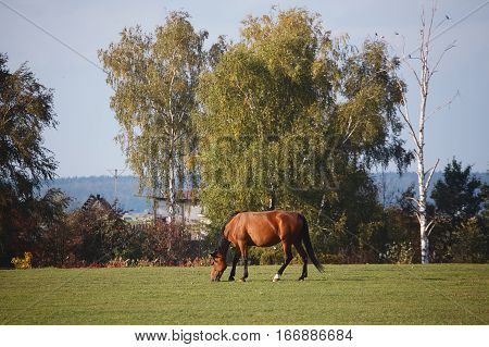 Horses In Nature On Sunny Warm Day