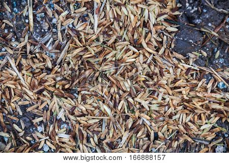 Close up view of rice texture on ground before peeling and polishing