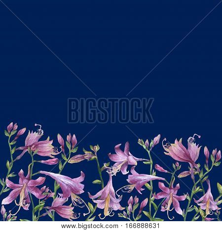 The frame of the branches with purple hosta flower. Lilies. Hosta ventricosa minor, asparagaceae family. Hand drawn watercolor painting on bright dark blue background.
