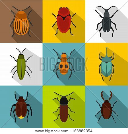 Insects beetles icons set. Flat illustration of 9 insects beetles vector icons for web