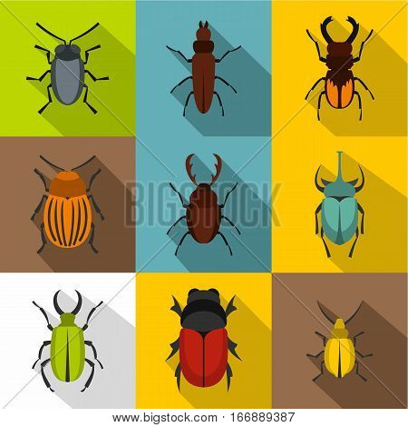 Crawling beetles icons set. Flat illustration of 9 crawling beetles vector icons for web