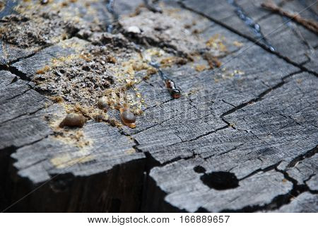 Beautiful, Wood trunk with Tree Sap, Sunset, Knot hole