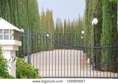 Green Giant Arborvitae Tree lined gated driveway