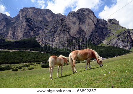 Alpine landscape with horses on the plateau summer grazing