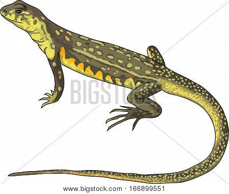 The greenish coloration lizard with long tail.