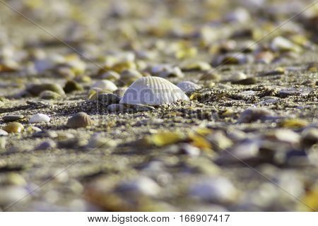beach water sea ocean waters sand sands nature shell clam clams mussel mussels waters fish fishs