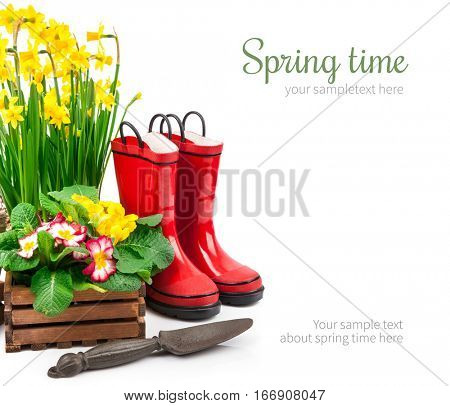 Spring flowers narcissus in basket with branch mimosa red boots and gardening tools for garden work, isolated on white background