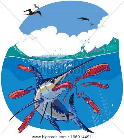 Vector cartoon clip art illustration of a blue marlin fish chasing and eating red squid under water while frigate birds fly in the sky above.