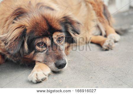 Homeless dog lying on the street