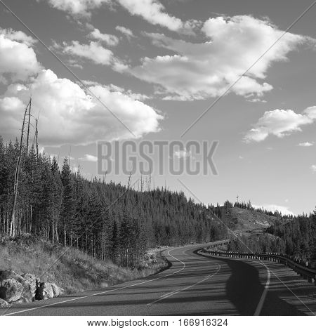 A back road winds up a forested hill in Yellowstone National Park with a sunny sky accenting fluffy clouds on a summer day.