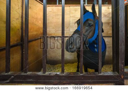 Horse covered with a blue blanket in a stable