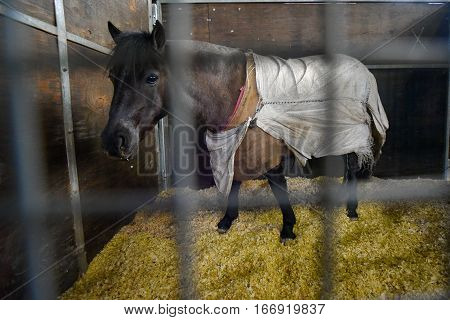 Pony covered with a blanket in a stable