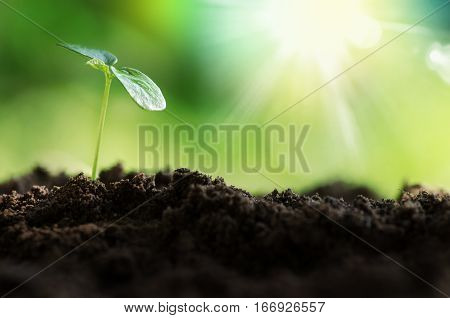 Plant new life and stat up concept.Young plant growing over green and sunlight environment