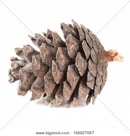 Pine cone isolated on white background backgroud