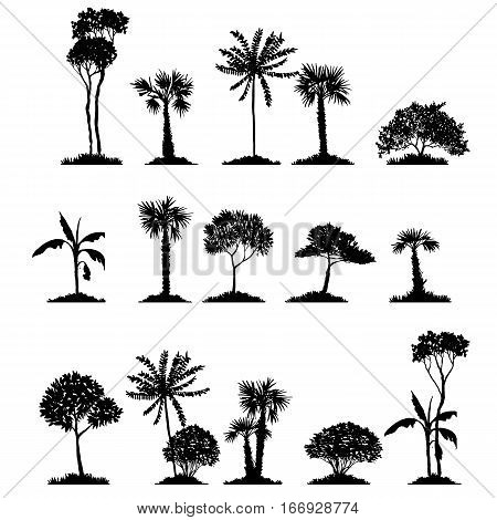 vector set of deciduous exotic trees, hand drawn isolated natural elements
