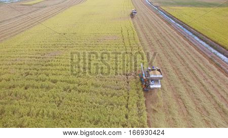 Aerial view of combine on harvest field in Ayutthaya Thailand