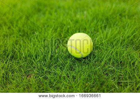 Tennis Ball On Green Leaf Background