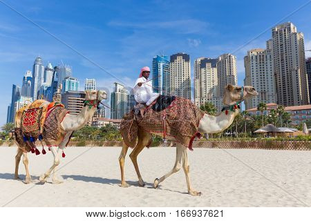 Dubai, UAE - Janury 31, 2016: Tour guide offering tourist camel ride on Jumeirah beach on 31th of January in Dubai, United Arab Emirates. Luxury Dubai Marina skyscrapers in background.