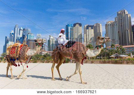 Dubai, UAE - Janury 31, 2016: Tour guide offering tourist camel ride on Jumeirah beach on 31th of January in Dubai, United Arab Emirates. Luxury Dubai Marina skyscrapers in background.