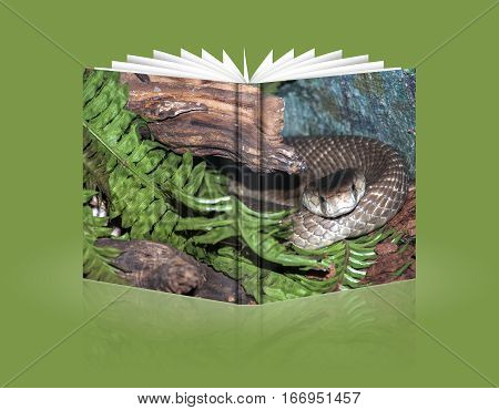 book of a cobra coiled snake on a stone