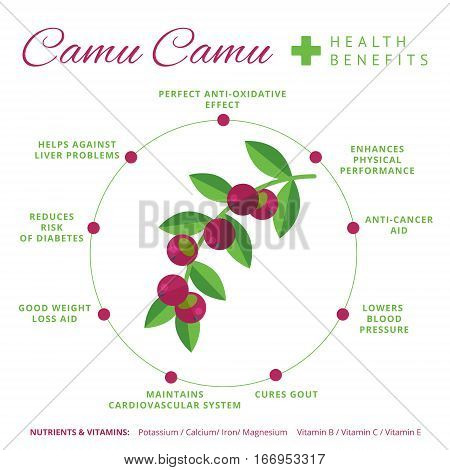 Camu Camu Berry Health Benefits And Nutrition Infographics. Superfood Camucamu Fruit Nutrients And V