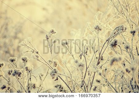 Hoarfrost on grass. Frosted grass at cold winter day, natural background.Dry grass covered with fragile hoarfrost in cold winter day