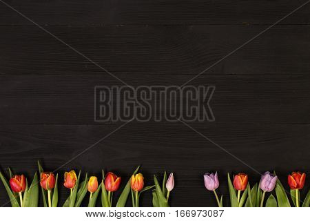 Lilac and red tulips in the black wooden table. Banner template layout mockup for Woman Day, Valentines Day and Teacher's Day. Photo for posts, blogs, advertising and news.