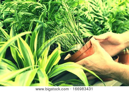 Hand picking up Potted Plant in garden centre