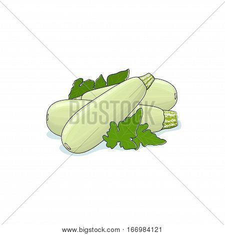 Zucchini ,Courgette Isolated on White Background, Three Different Kinds Courgette Vegetables Zucchini, Edible Fruit