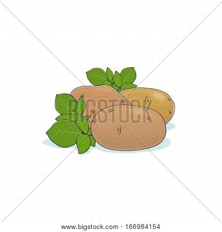 Potato Isolated on White Background, Three Different Kinds Potato, Vegetables Praties, Edible Fruit