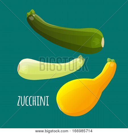 Zucchini or courgette vegetables set. Different kinds of summer squash vector editable illustration. Zucchini vegetable in green and yellow colors. Veggies isolated squash marrow in realistic style