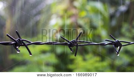 Barbed wire under the rain. Water drops on sharp wire knots. Closeup photo of garden fence protecting property from forest. Concrete wall with razors. Black wire border. Territory border concept image